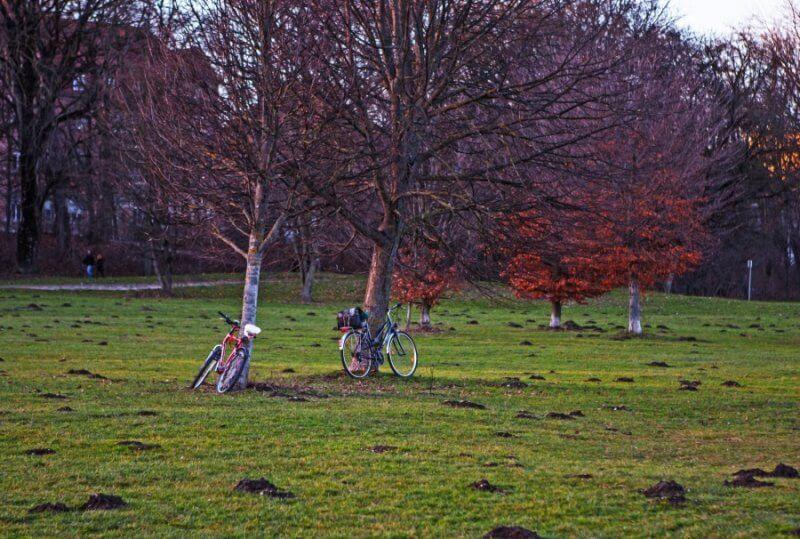 Велосипеды в Английском парке