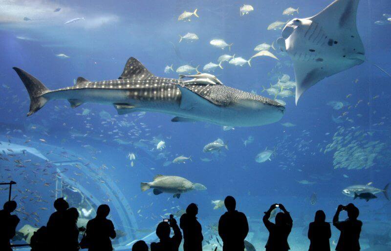 Панорамный аквариум в зоопарке
