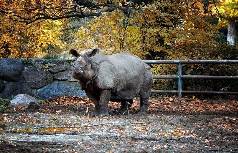 Носорог в зоопарке