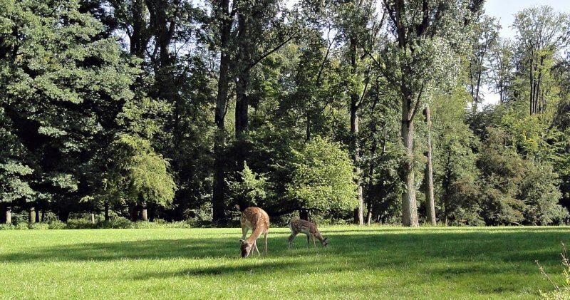 Животные в Wildpark Grafenberg