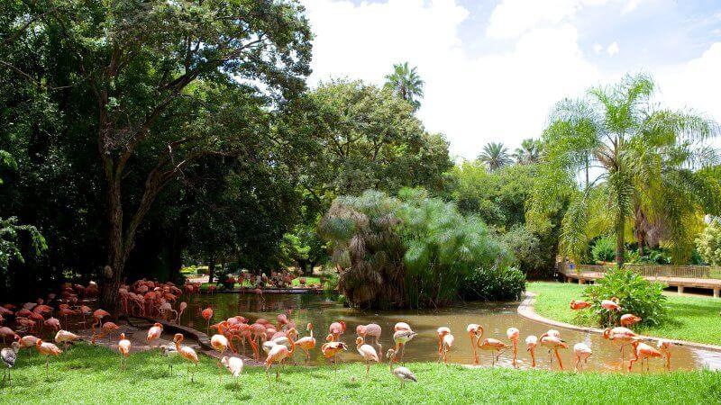 Фламинго в зоологическом саду