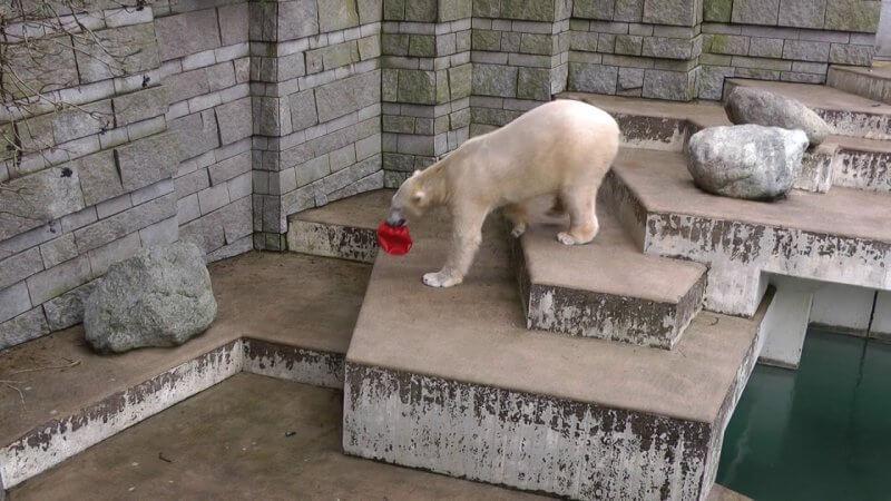 Зоопарк в Вупперталь