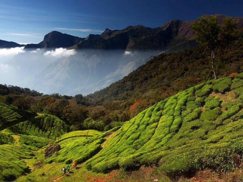 Индия, штат Керала