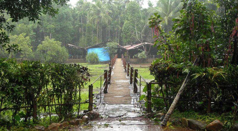 Мост на плантации тропических специй