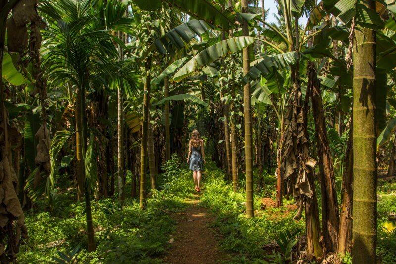 Плантация тропических специй