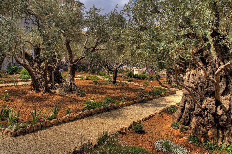 Гефсиманские сады