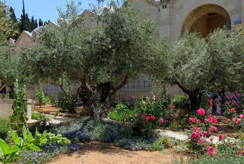 Цветы в Гефсиманских садах