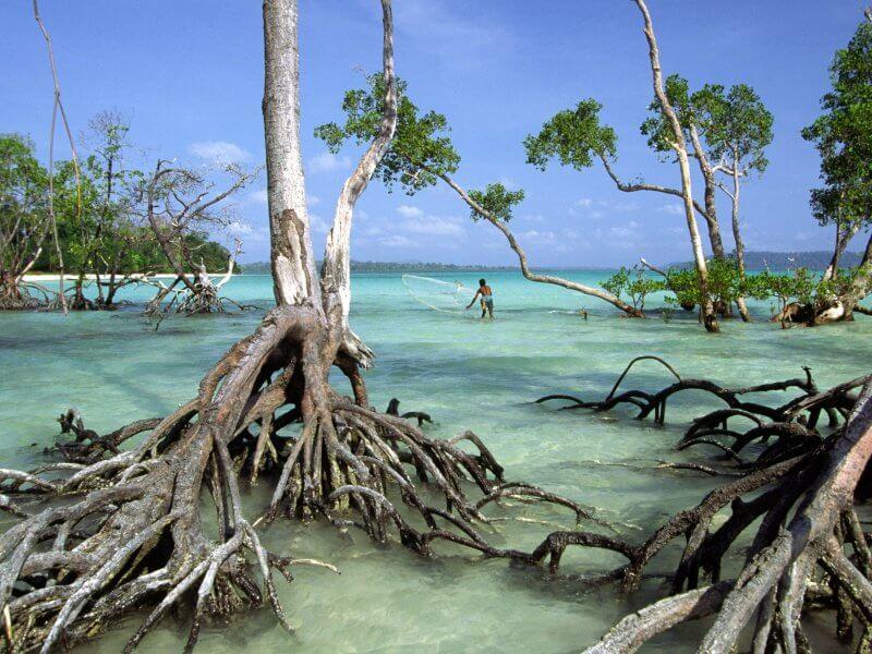 Уникальные деревья на Андаманских островах