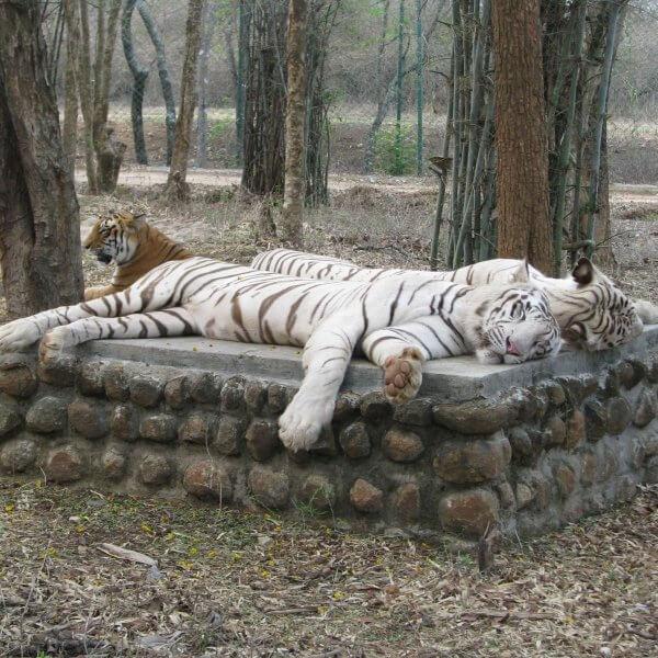 Национальный парк Баннергхатта