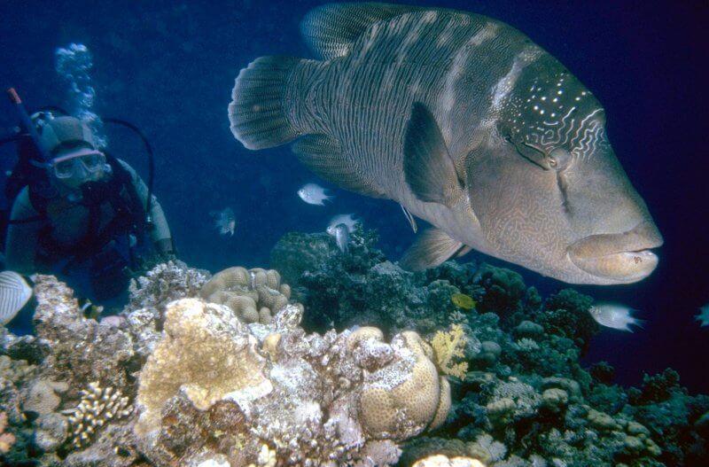 Рыбы на Андаманских островах