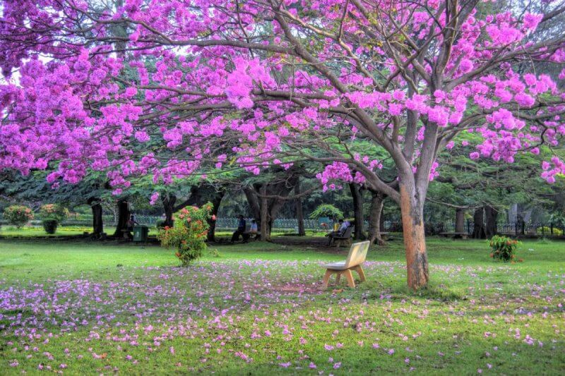 Парк Куббон