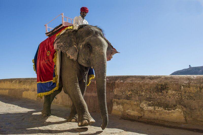 Слон на территории форта Амбер