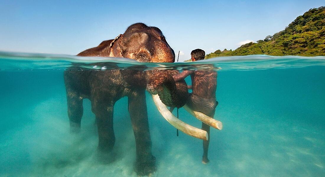слон в море на Андаманах