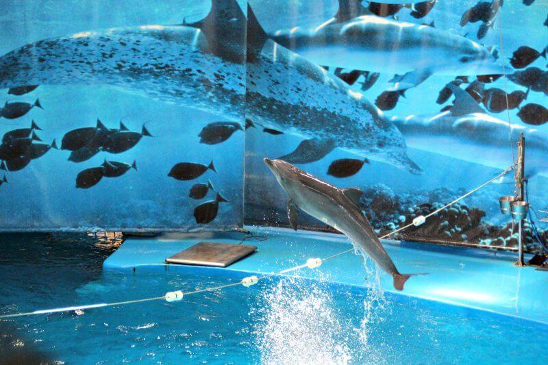 Дельфинарий в парке Цитадели