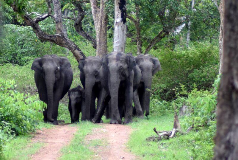 Национальный парк Бандипур