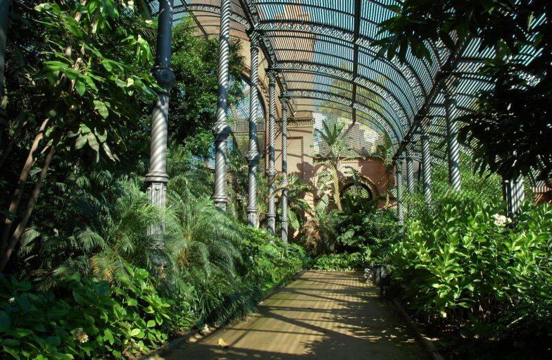 Растения в парке Цитадели