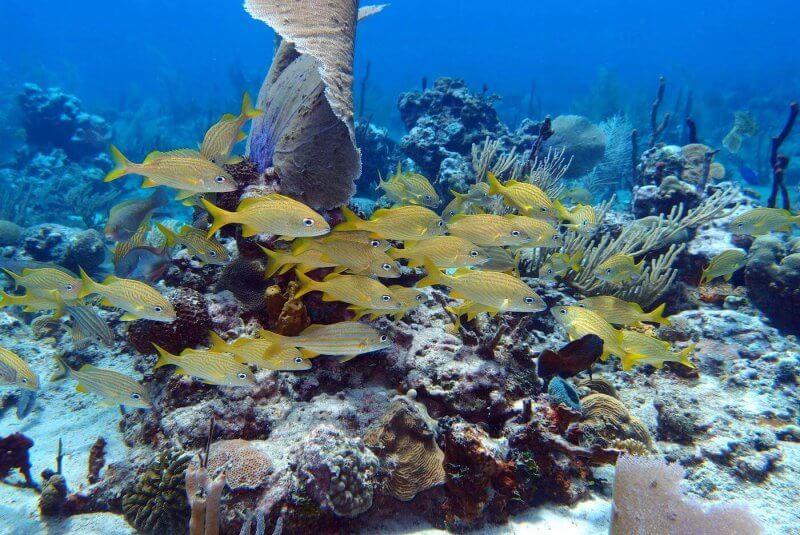 Подводный мир острова Каталина