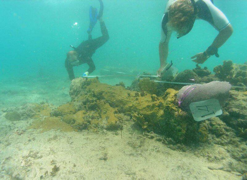 Подводный музей пирата Кидда