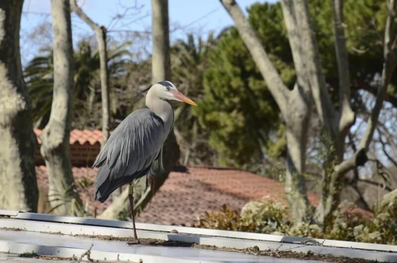 Птица в зоопарке Цитадели