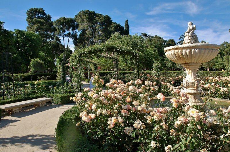 Розовый сад в парке Ретиро
