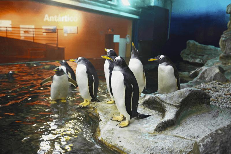 Зона Антарктики