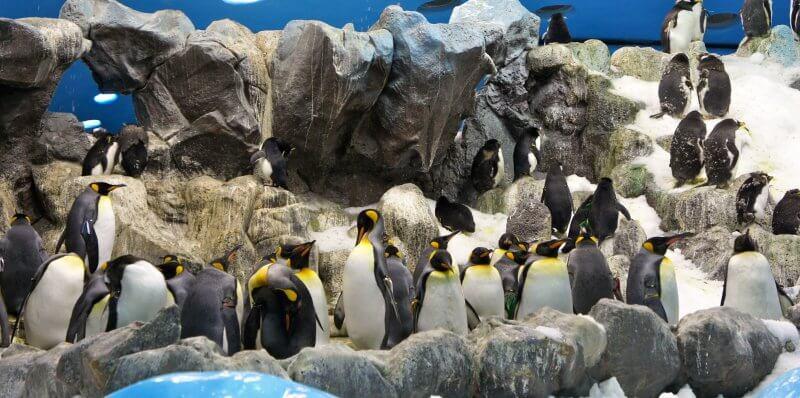 Пингвинарий в Лоро парке
