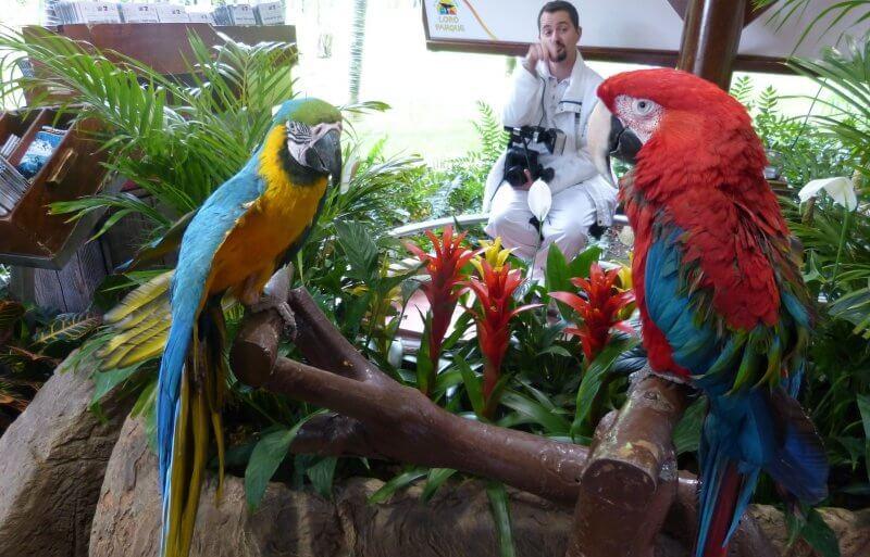 Фото с попугаем в Лоро парке