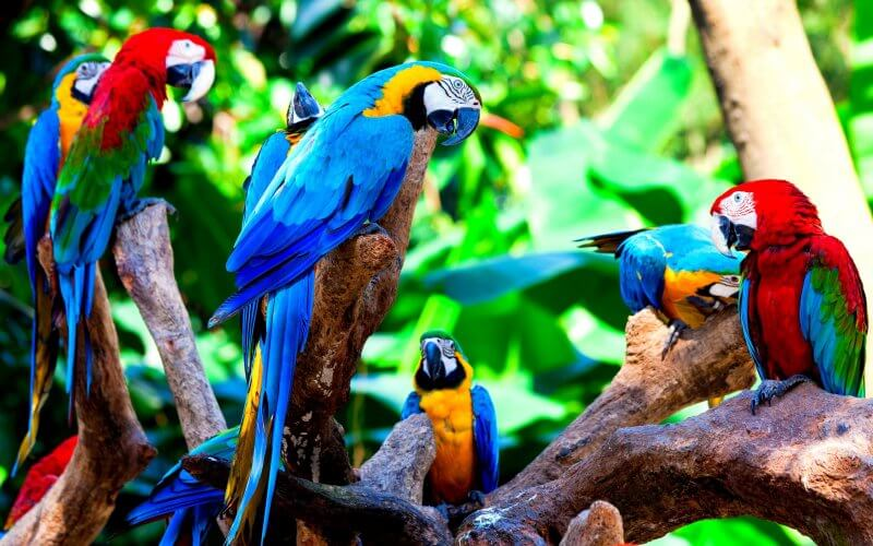 Попугаи в Лоро парке