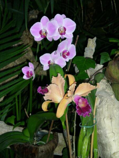 Сад орхидей в Лоро парке