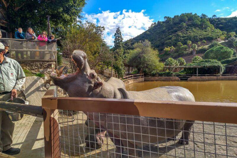 Животные в парке развлечений