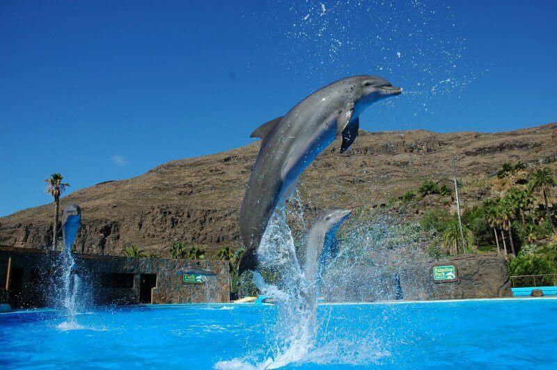 Дельфинарий в Маспаломасе