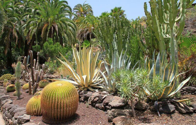 Ботанический сад в Маспаломасе