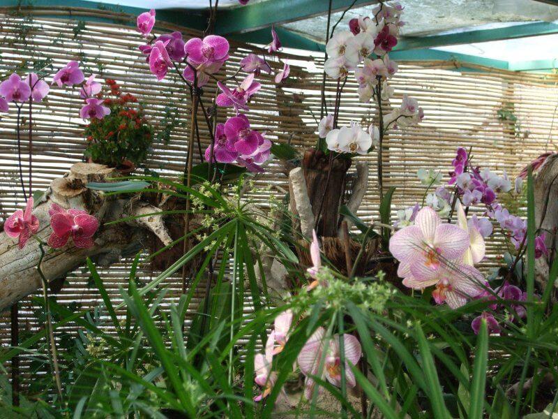 Сад орхидей Ситио Литре
