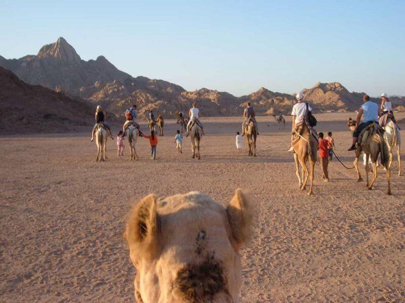Экскурсия на верблюдах
