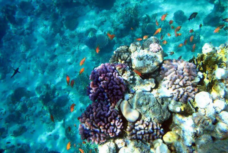 Кораллы заповедника Рас-Мохаммед
