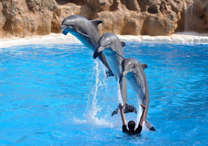Парк Дельфинов