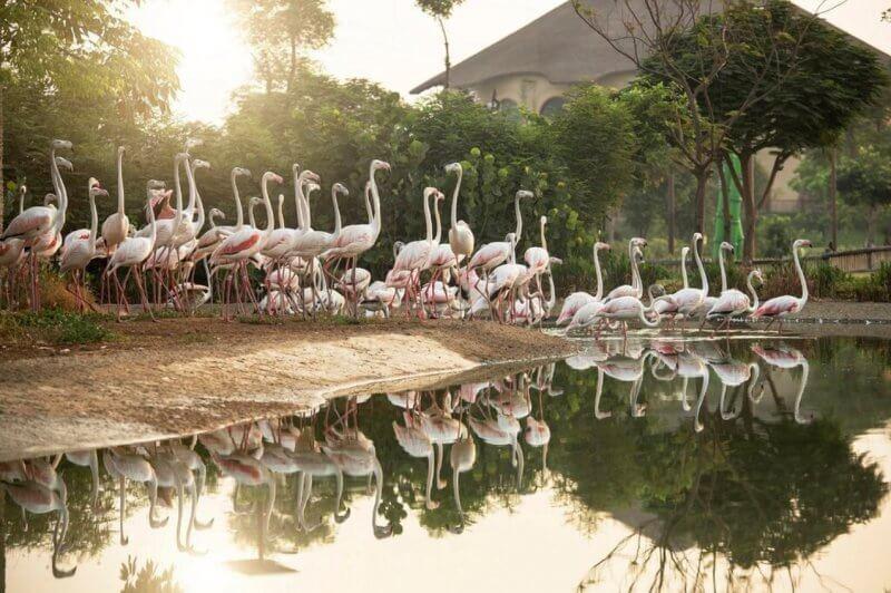 Фламинго у озера