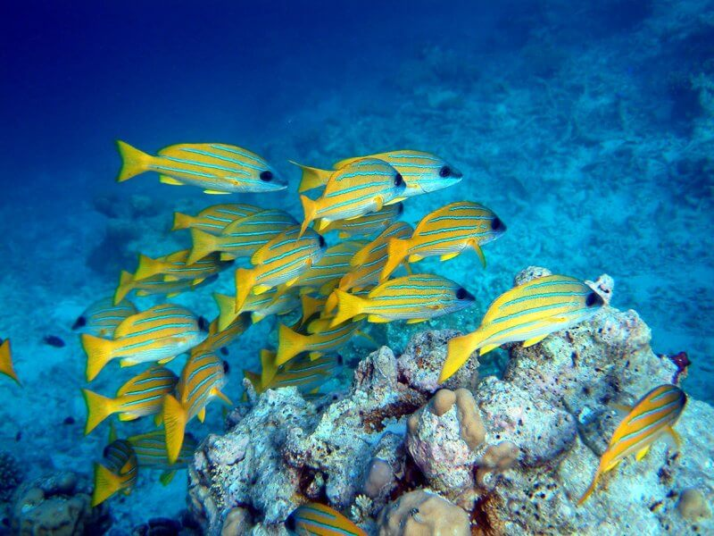 Рыбки на Сейшелах
