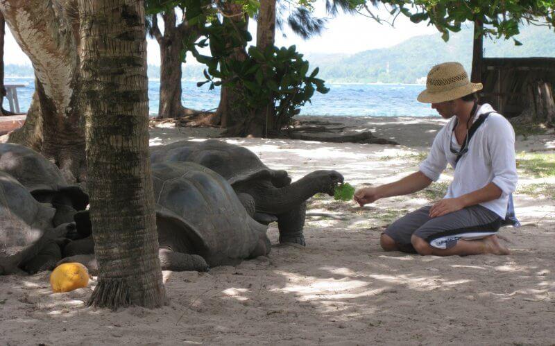 Человек кормит черепаху